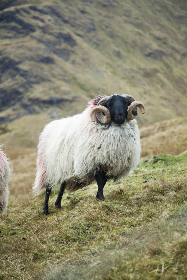 FEAST Connemara Hill Lamb_34