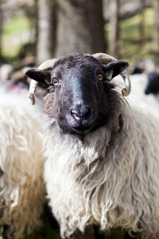 FEAST Connemara Hill Lamb_50