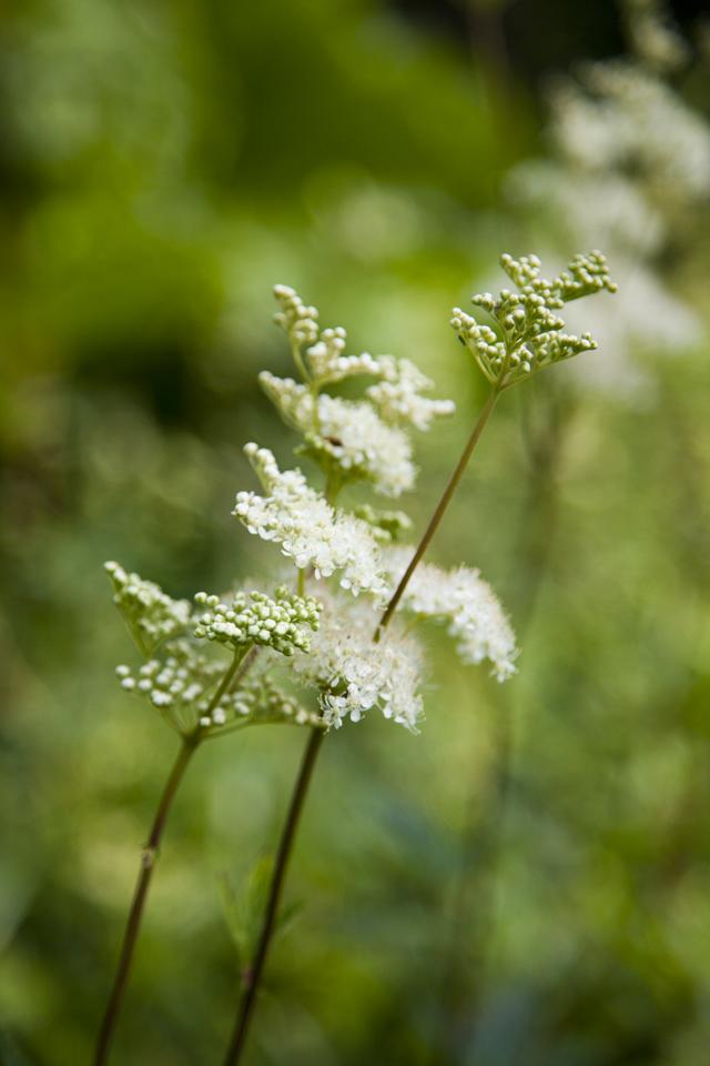 FEAST Herb Garden Re-edit