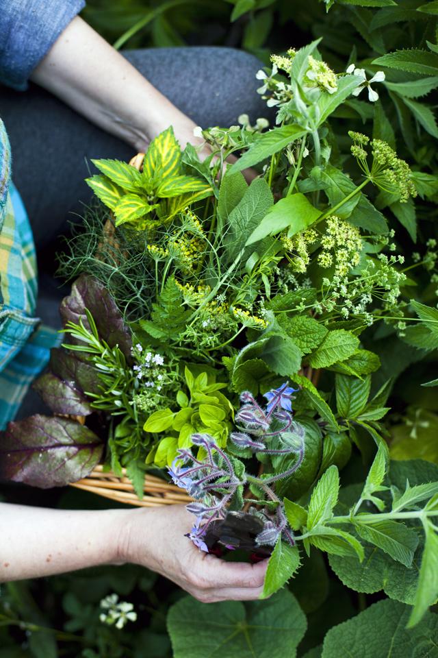 FEAST The Herb Garden_22